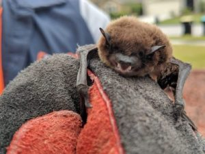 picture of hand captured bat