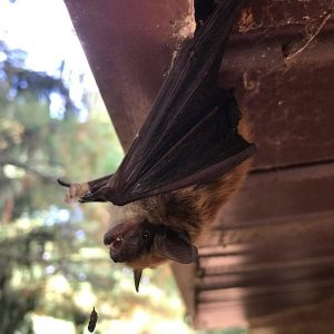 image of bat in home