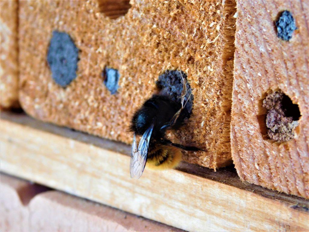 image of carpenter bee