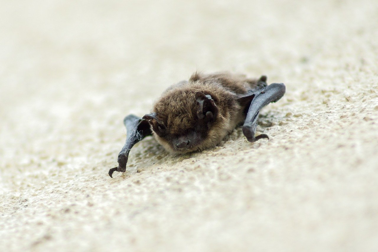 Picture of a brown bat