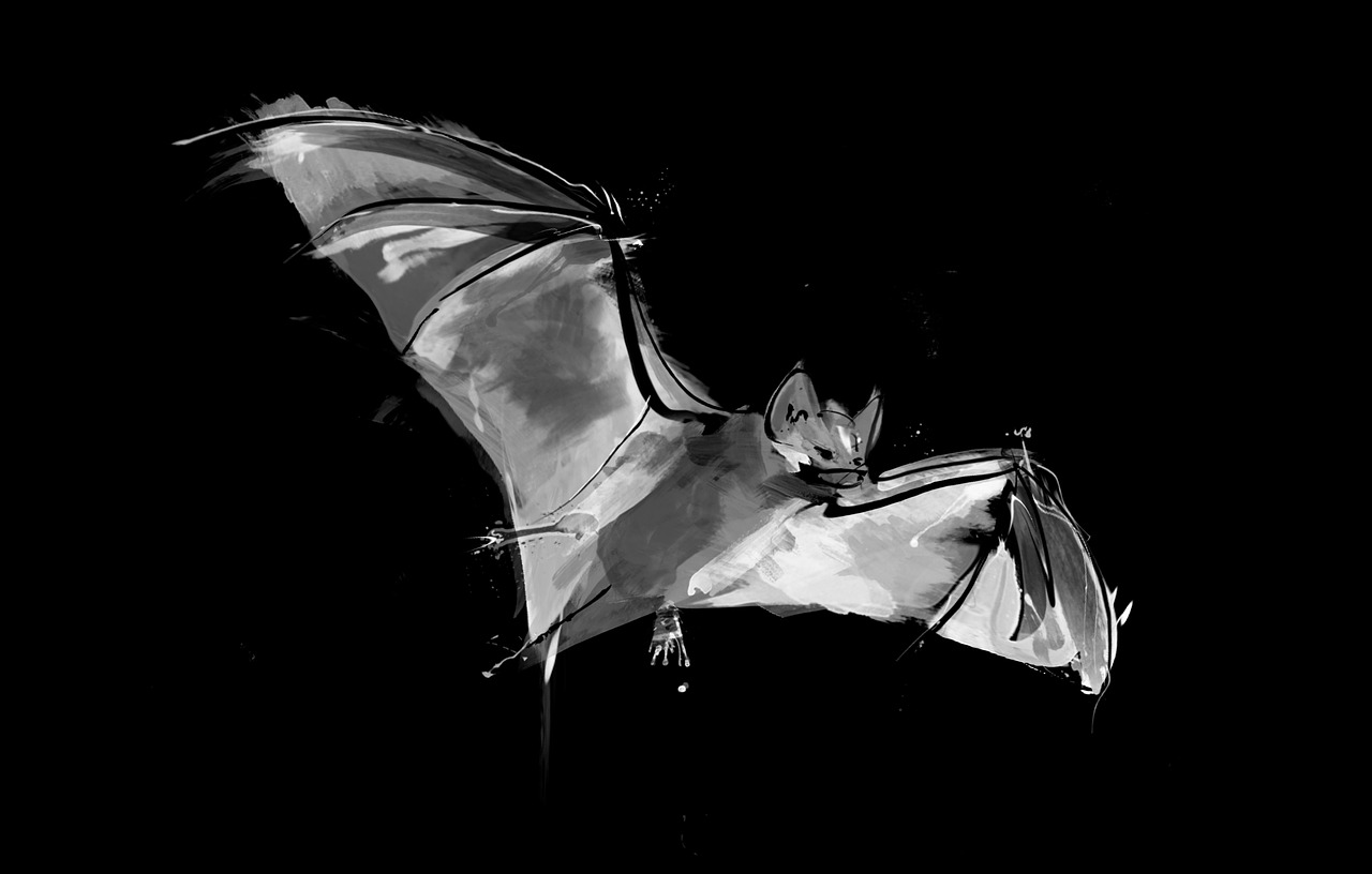Drawing of a Ghost-faced Bat