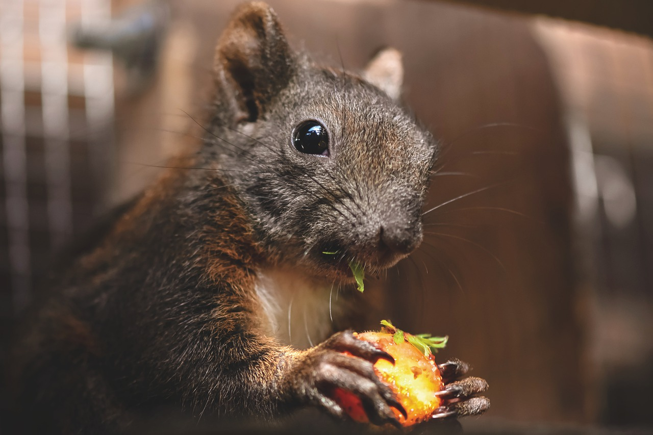 Picture of squirrel eating nuts