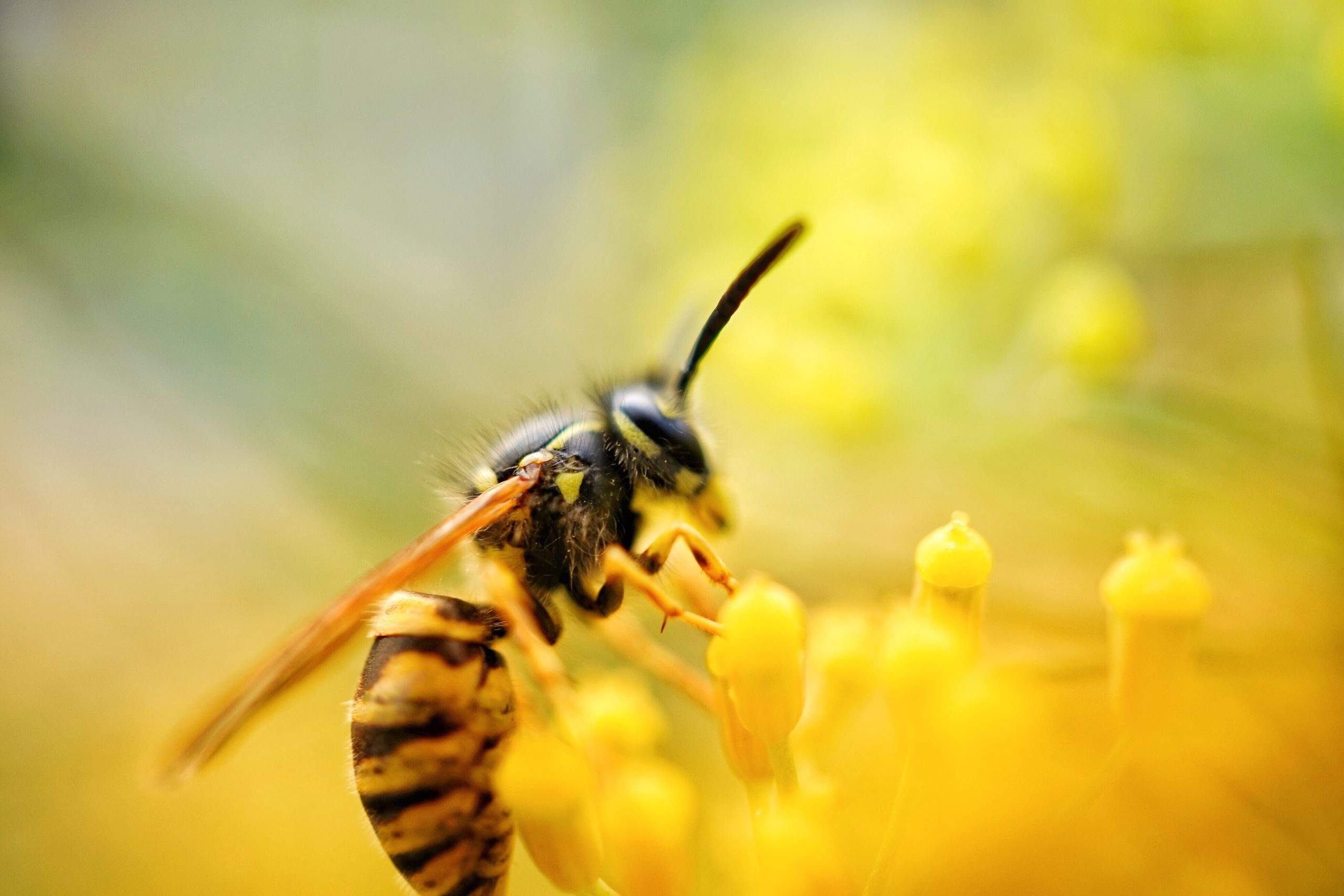 Image of wasp extracting nectar