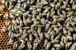 Photo of honey bee colony