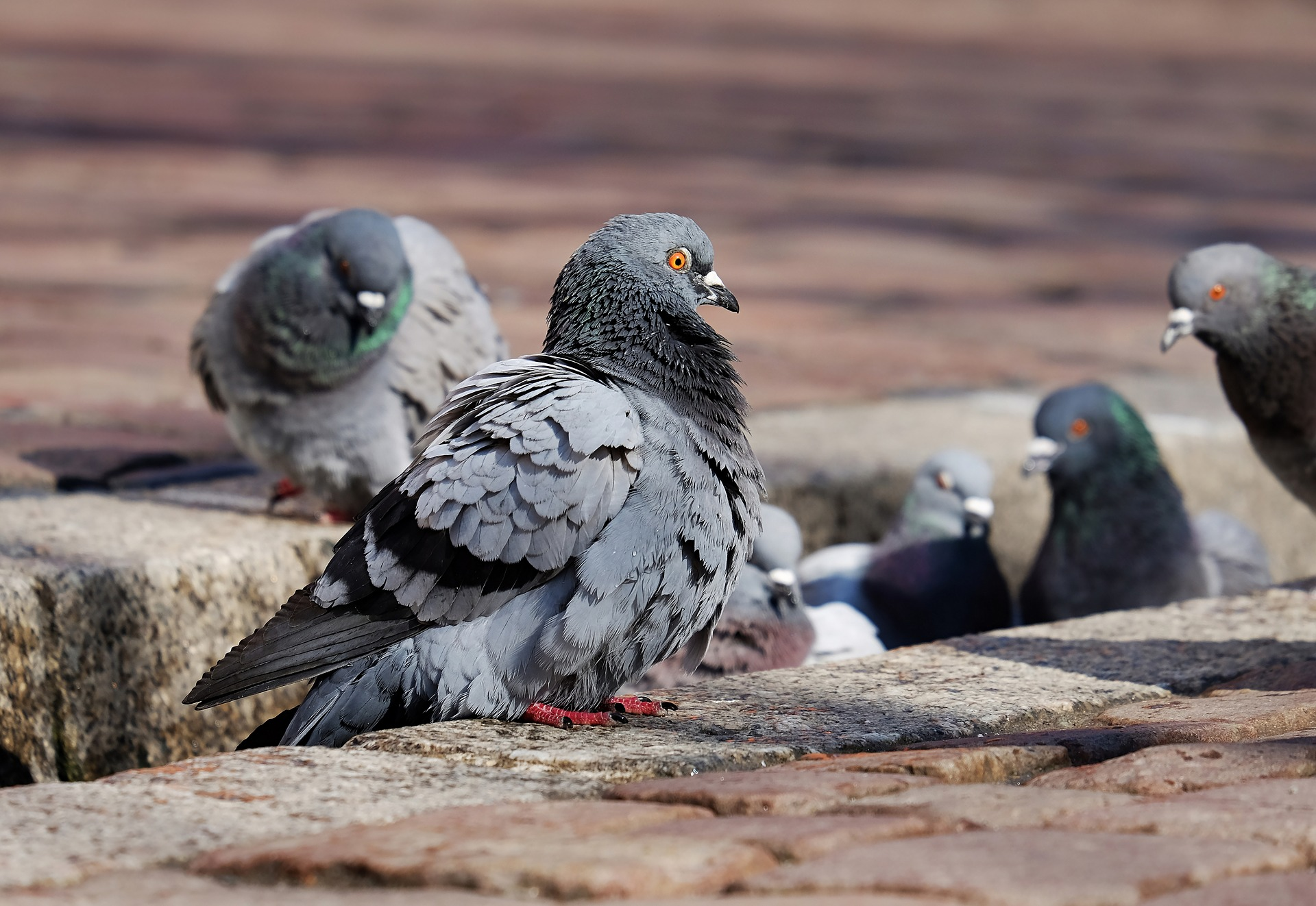 Photograph of pigeons sitting in the street