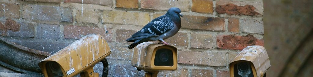 Picture of pigeon resting on security camera