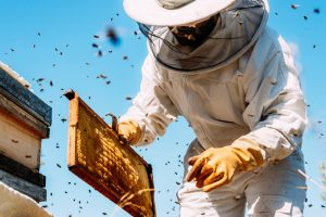 Image of bee keeper removing honey bees from a home
